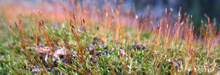 Photo: hutcheson moss. Image courtesy of Lena Struwe CC.